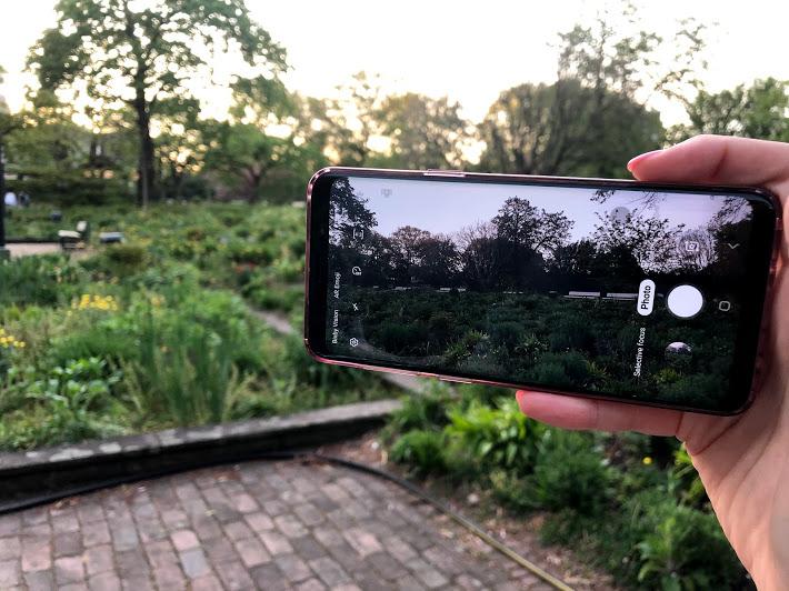 Wenn wir die Stadt und Blume nur durch unseren Handy gucken. Foto: Hussam Al Zaher.