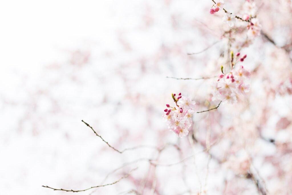 Die weiße Blume